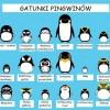 gatunki-pingwinc3b3w-plakat-kopia