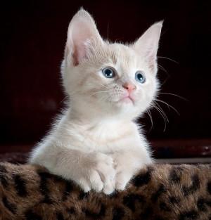 cat-551554_640